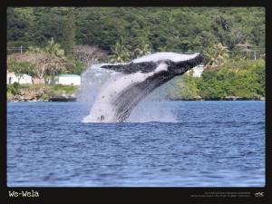 A3-17-Baleine