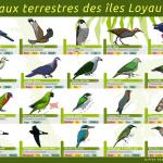 """Fiche-terrain """"oiseaux terrestres des Loyauté"""""""