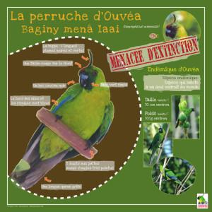 Panneau de présentation de la Perruche endémique d'Ouvéa