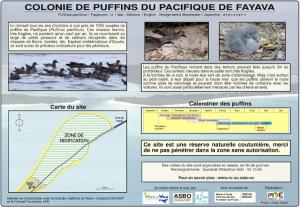Puffin du pacifique de Fayava Ouvéa îles Loyauté